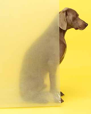 William Wegman (b. 1943) Land O' Lakes 2004 pigment print 30 x 24 inches 76.2 x 61 cm Edition of 15