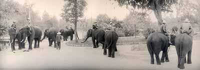 Elephant training center, Hang Chat, Thailand, January 2005