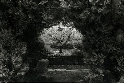 Der Dornbusch, Frankreich 2000