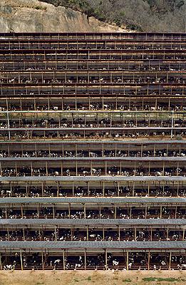 Andreas GurskyFukuyama, 2004305,4 x 207 cmC-Print© Andreas Gursky / VG Bild-Kunst, Bonn 2007Courtesy Monika Sprüth / Philomene Magers