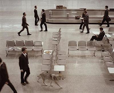 The Wolf in Tempelhof Video still from