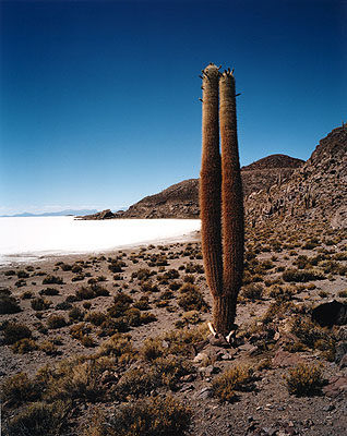 Discovery, 2006 © Scarlett Hooft Graafland