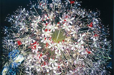Nobuyoshi ArakiUntitled (From Painting Flowers), 2004Cibachrome Print50 x 60 cmCourtesy Jablonka Galerie, Köln/BerlinFoto: Matthias Langer, Braunschweig/Varel© Nobuyoshi Araki