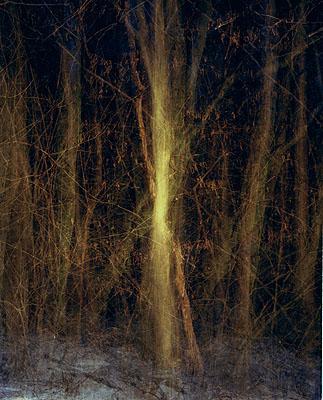 Wald, 877|1, 2006,aus der Serie
