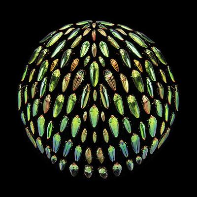 Robyn StaceyBeau Monde (green), 2006from Beau MondeType C print120 x 120cm, edition of 5 + AP