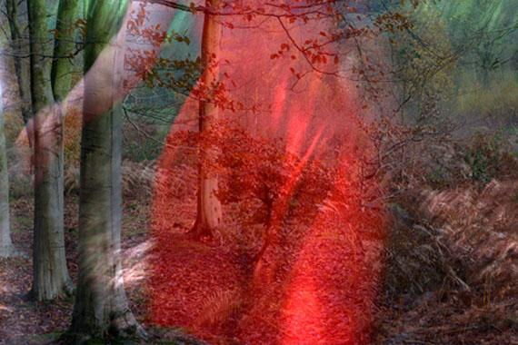© Helen Sear, Company of trees