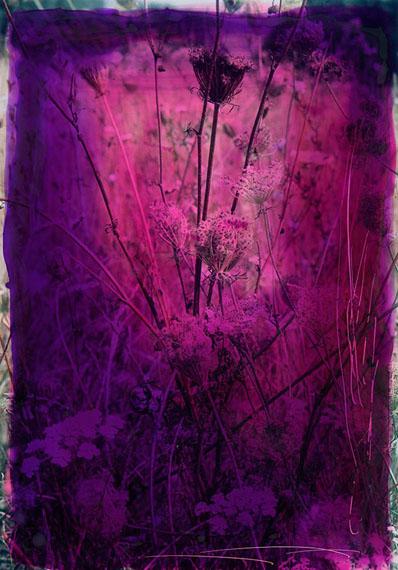 VERONICA BAILEYTwined FlowersEdition of 5Durst Lambda photographic C-type62 x 45 cm© Veronica Bailey / Courtesy of Bernheimer Fine Art Photography