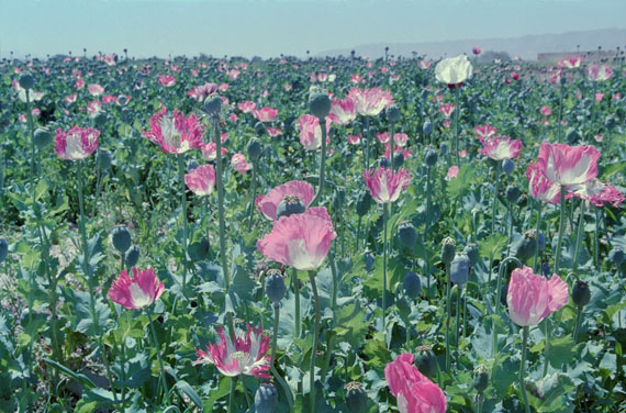 Poppy. Trails of Afghan Heroin