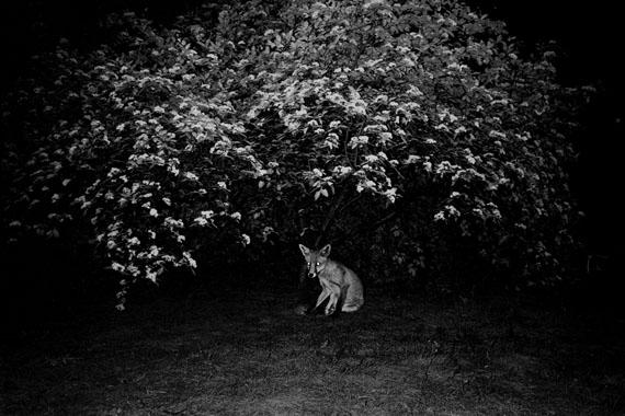 © Chris F. Michel
