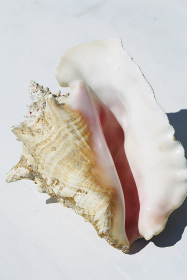 Conch shell, 2015 © Roe Ethridge / Courtesy of the artist and Gladstone Gallery, New York and Brussels