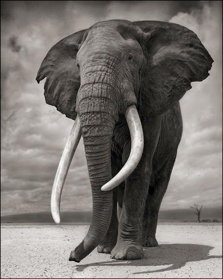 Elephant on Bare Earth, Amboseli, 2011© Nick Brandt. Courtesy of the artist and Edwynn Houk Gallery, New York and Zurich