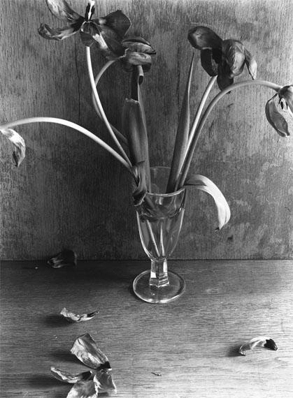 """© Manfred Paul""""Nature Morte"""" (Stillleben) 1983-1985Verblühter Tulpenstrauss, 1984Silbergelatineabzug20 x 24 (30 x 40) cm"""