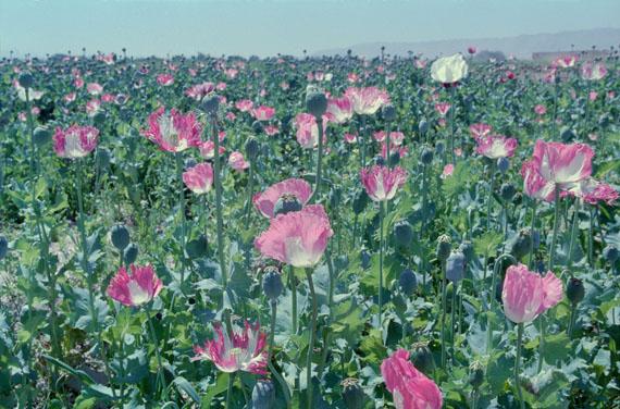 Poppy – Trails of Afghan Heroin