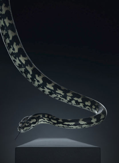 Peter Hebeisen: Snake, 2012 Pigment print on Archival paper Ed. of 8145 x 112 cm (Ed.5) and 218 x 160 cm (Ed.3)