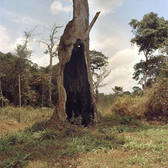 Andréas Lang: Hohler Baum, Cameroun 2016, Archival Pigment Print