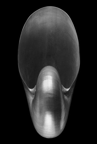 Alfred EhrhardtNautilus pompilius L., Philippinen, 1940/41, Abzug 1968Silbergelatine, 30 x 24,2 cm© bpk / Alfred Ehrhardt Stiftung