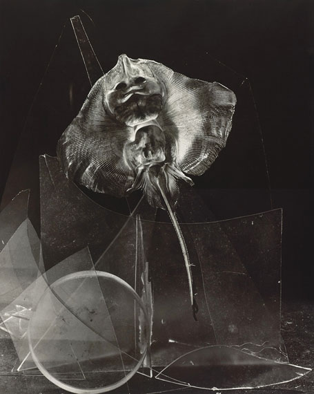 A ray's smile, 1997, Gelatine silver print, selenium-toned, © Michel Medinger, Collection CNA