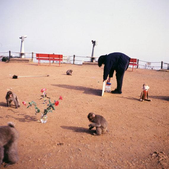 ShimabukuGift: Exhibition for the Monkeys, 1992Cibachrome mounted on aluminium, text on paper70 x 70 cm (image size)Edition 4 of 5 + 2 AP