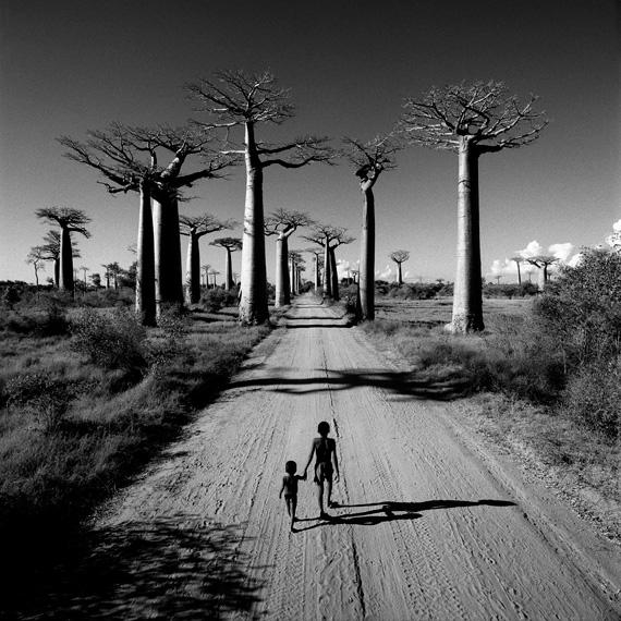 Chris SimpsonAllèe des Baobabs, Madagascar, 1997Atlas Gallery