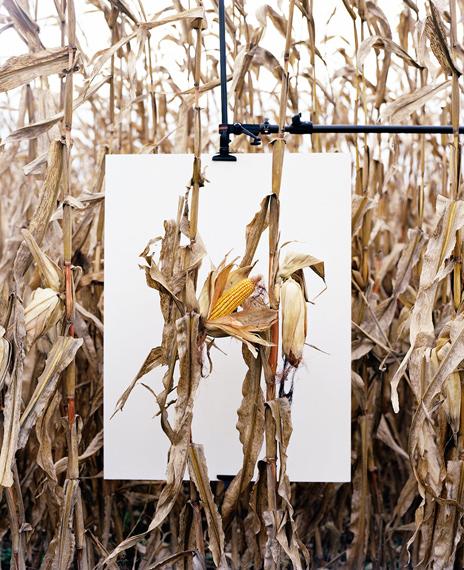 Monsanto<sup>®</sup>: A Photographic Investigation