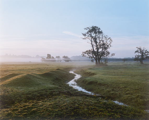 New Forest, 2018C print58 x 71in / 148 x 180cm (edition of 3)32 1/2 x 39 in / 83 x 100cm (edition of 7)© Harry Cory Wright