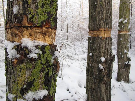 from the series Dagdrömmarnas Plats © Finn Larsen