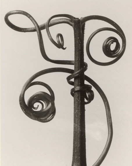 "Karl Blossfeldt (1865–1932)Cucurbita. Kürbisranke, 4 mal vergrößertaus dem Portfolio ""Karl Blossfeldt. 12 Fotografien"" (Galerie Wilde, Köln 1975), 1900-1928 (Abzug 1975), Silbergelatineabzug, 19,5 x 24,6 cm © Kunstpalast, Düsseldorf"