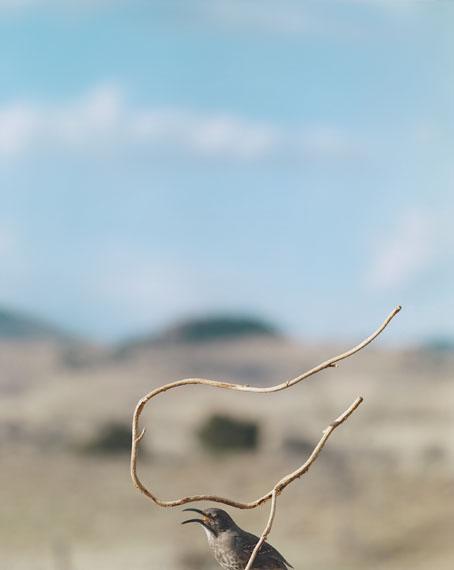Jean-Luc Mylayne N° 524, Février Mars Avril, 2007228 × 183 cmCollection Mylène et Jean-Luc Mylayne © Jean-Luc MylayneCourtesy Gladstone Gallery, New York, Brüssel;Sprüth Magers, Berlin, London, Los Angeles