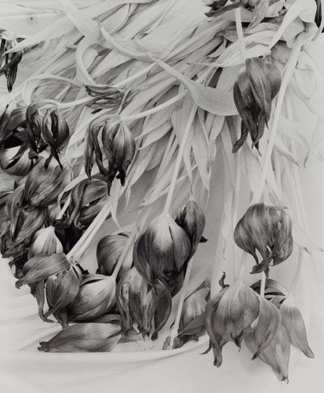 Manfred PaulAus: still — Leben, 1999, Silbergelatine auf Barytpapier, 36,3 x 29,9 cm (Motiv)© Manfred Paul, Courtesy LOOCK, Berlin