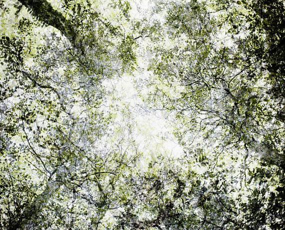 Forest © Santeri Tuori