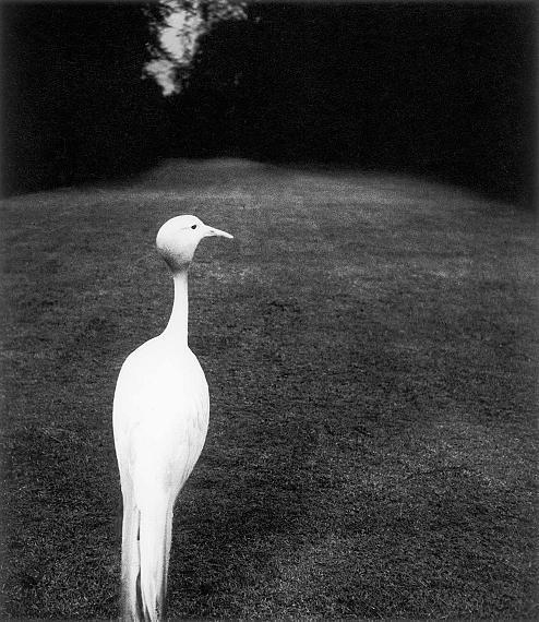 Bill BrandtEvening in Kew Garden, 1932Private collectionCourtesy Bill Brandt Archive and Edwynn Houk Gallery © Bill Brandt / Bill Brandt Archive Ltd.