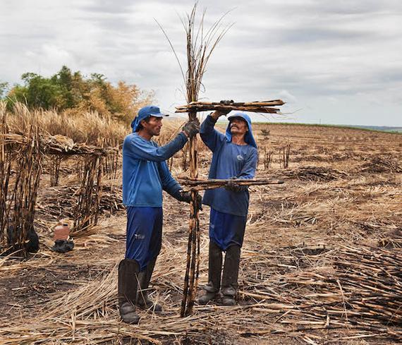 ABC da cana (Sugarcane ABC), 2014 © Jonathas de Andrade.