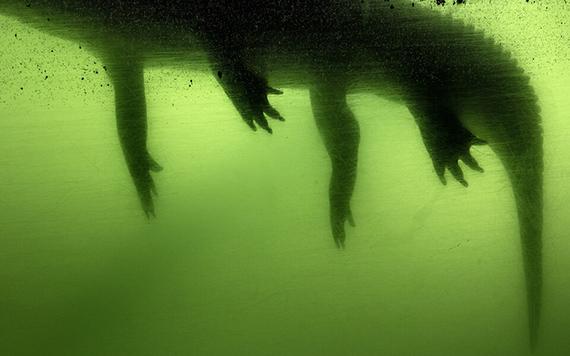 FloodZone © Anastasia Samoylova