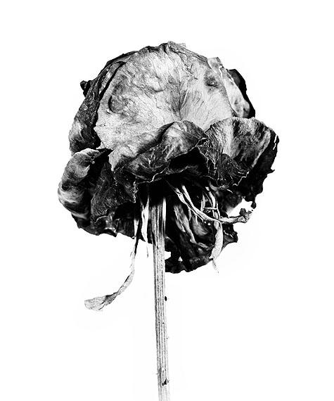 Walter Schels, o.T. # 01, 2010, Fiber based Fine Art Print, 60 x 50 cm