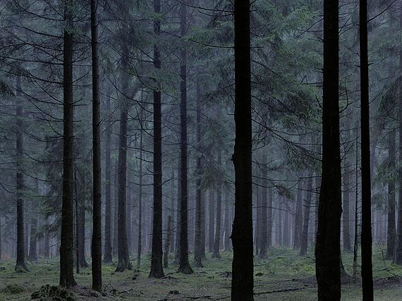 Michael Lange, Wald # 0252, 2009, Archival pigment print, © Michael Lange
