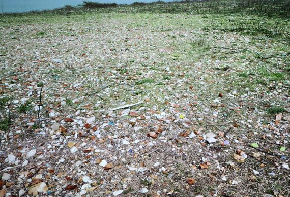sacca san mattia is the largest piece of vacant land in venicevideo stiiimage © designboom© lara almarcegui