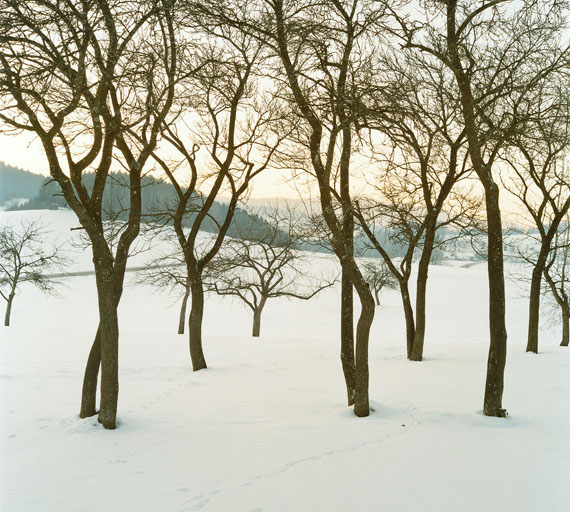 Bernhard Fuchs: Obstbäume, Laimbach, 2010-, C-Print, 23,5 x21 cm