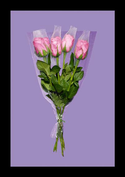 Tina Winkhaus: Rose rosa, 2013, 123 cm x 173 cm, Auflage 1/1AP