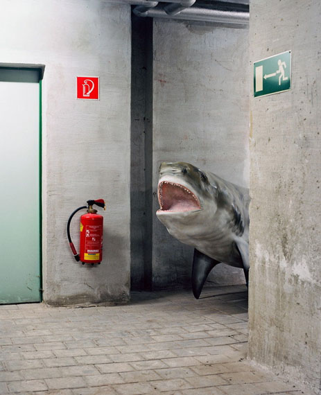 """Klaus Pichler: """"Shark at the Museum of Natural History Vienna"""", pigment print, 65 x 80 cm, Ed. 5 + II AP"""