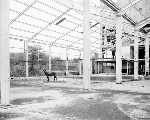Jo Ractliffe: Donkey, Pomfret, 2013, aus der Serie The Borderlands