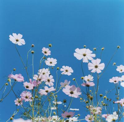 "Rinko Kawauchi  , Untitled (from the series ""Aila""), 2004 , c-print, 101 x 101 cm, ed. 6"