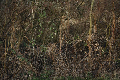 Emanuel Raab,Winterwald #5, 2007, Fine Art Pigment Print, 44 x 60 cm