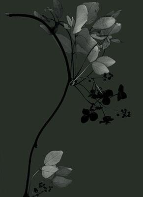 Exposure 2 (akebi), 2008130x100cmpigment print on rag