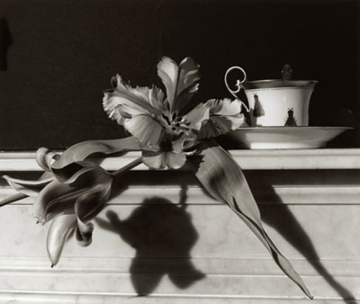 Tulips on Marble - lowres, 1989 © Horst P. Horst