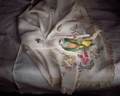 Rose crowned fruit dove with fancywork, 2009, archival print on cotton rag paper