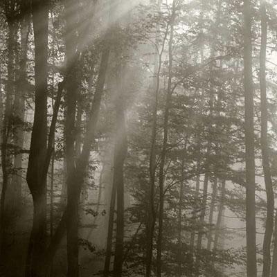 The2Circles. Alpenpässe - Woodlands