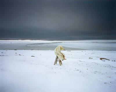 Polar bearFrom the series: Iglooik, Canada, 2007Courtesy Michael Hoppen, London / LondenCourtesy Vous Etes Ici, Amsterdam© Scarlett Hooft Graafland