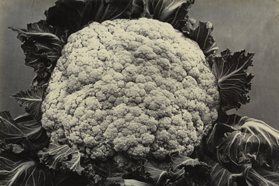 © Charles Jones - Broccoli Late Queen c.1900. Courtesy of the Michael Hoppen Gallery.