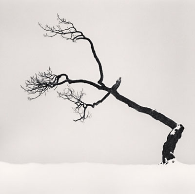 """Kussharo Lake Tree, Study 6, Hokkaido, Japan"" (2007)Silver gelatin print. 20cm x 20cm - Edition of 45. © Michael Kenna. Courtesy of m97 Gallery"