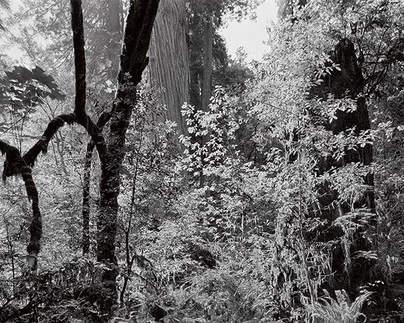 Richard Rothman, Redwoods Saw #1484, 2010